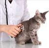 Ветеринарные клиники в Егорлыкской